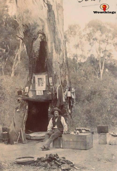 An Australian Swagman using a hollow gum tree as a campsite